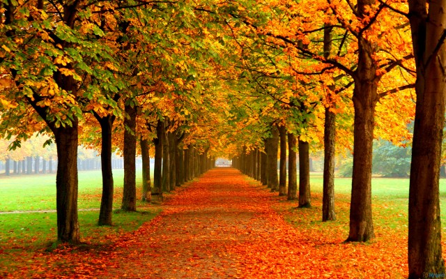 Wealth, Happiness and Autumn Leaves – The Meaning Of Success